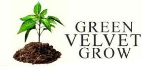 green_velvet